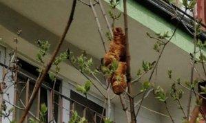 """""""나무 위에 괴생명체가…"""" 주민들 떨게한 '공포의 크루아상'"""