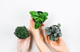 집 안에서 느끼는 자연의 생기, '반려 식물' 키우기