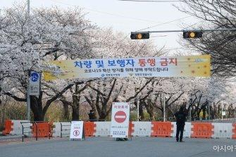 [포토] 통행 금지된 여의도 벚꽃길