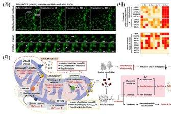 세포 환경 실시간 탐지 물질로 미토콘드리아 산화 손상 과정 밝혀