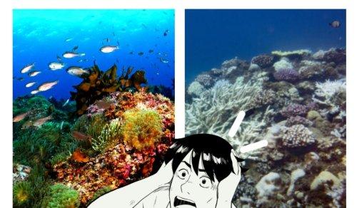 화려한 제주 산호초, 더이상 볼 수 없게 된다고?
