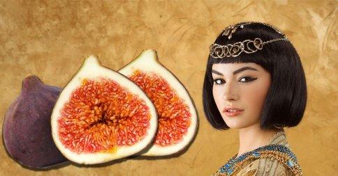클레오파트라의 과일 '무화과' 맛있게 먹는 법!