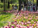 [포토]'봄의 절정'